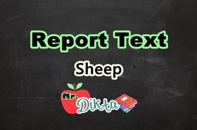 Report Text Tentang Domba Dalam Bahasa Inggris