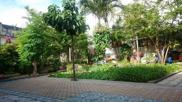 Là một trong những homstay Lý Sơn có sân vườn xanh mát