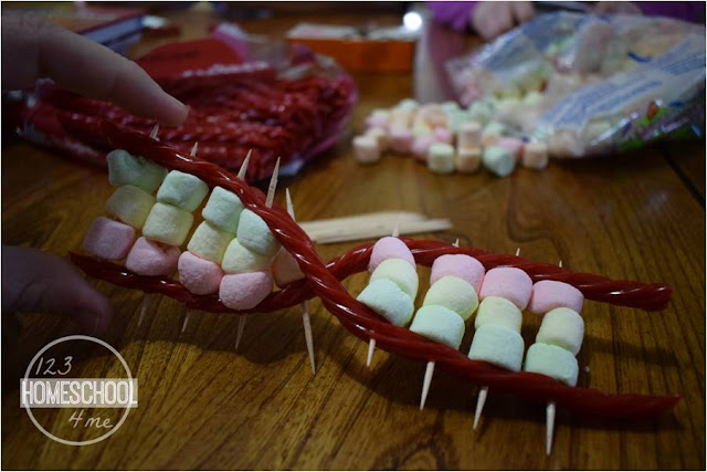 edible licorice dna strand science project for kids learning about human cells