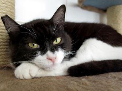 Um gatinho Redondinho  ADOTADO! aa6e3f88e4