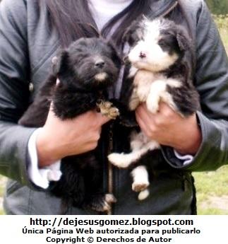 Foto de perros muy pequeños de Jesus Gómez