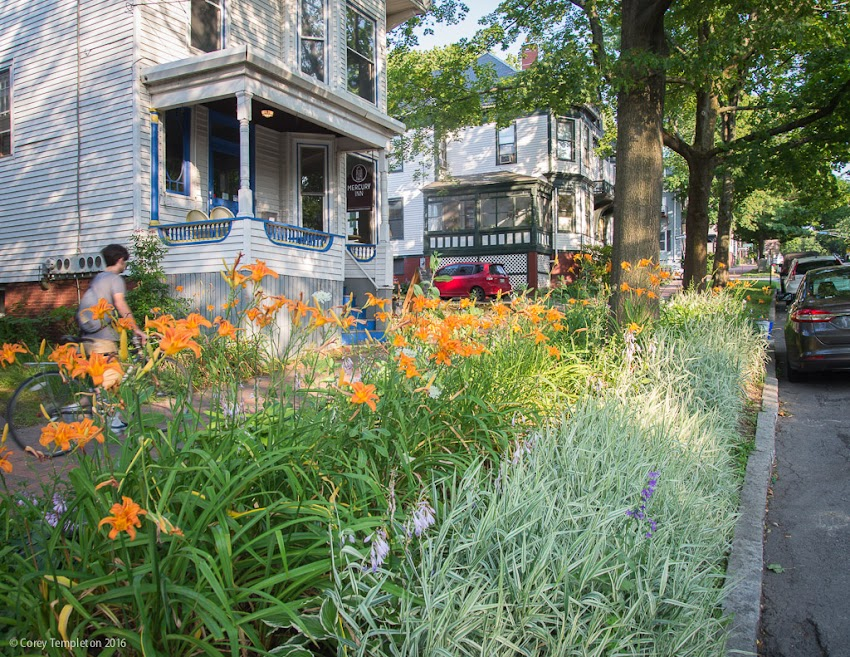 Portland, Maine USA July 2016 photo by Corey Templeton. Some nice sidewalk landscaping along State Street, near the Mercury Inn.
