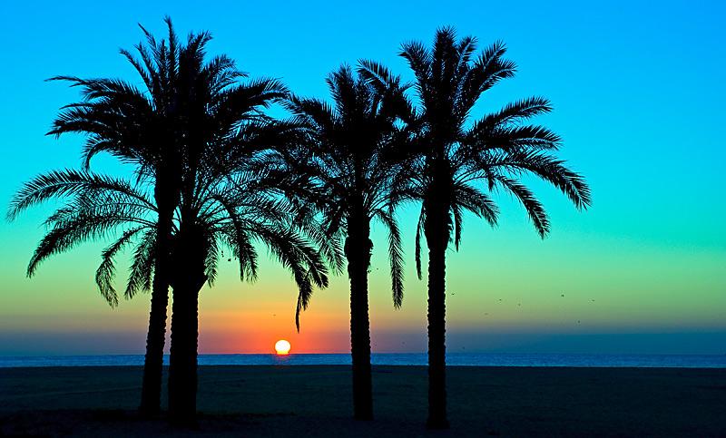 Tropical Island Beach Sunset: Compartiendo Sentimientos: La Palmera