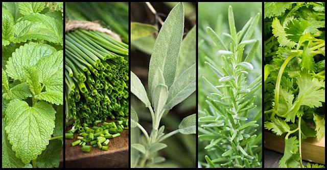 Medicinal Plants and Herbs We Need To Grow In Our Garden