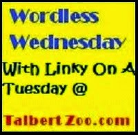 http://www.talbertzoo.com/2015/05/wordlesswednesday-with-linky-on-tuesday_12.html