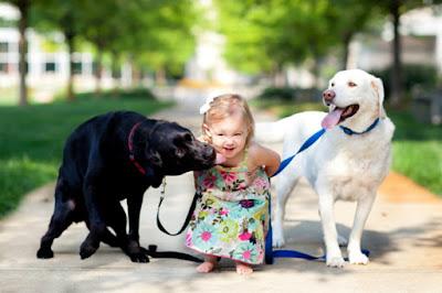 El Perro labrador y su comportamiento