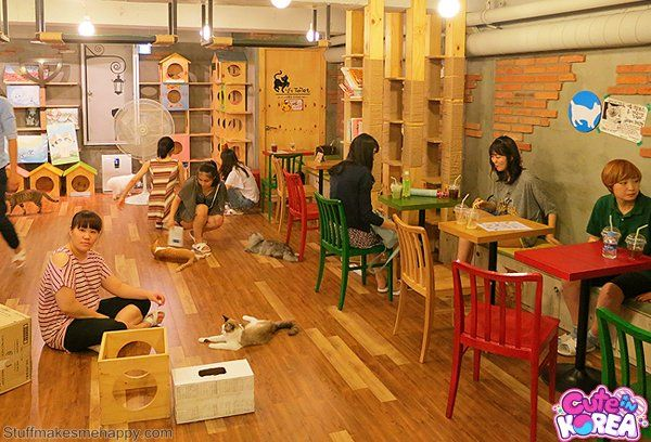 6. Cat or dog cafe, everywhere