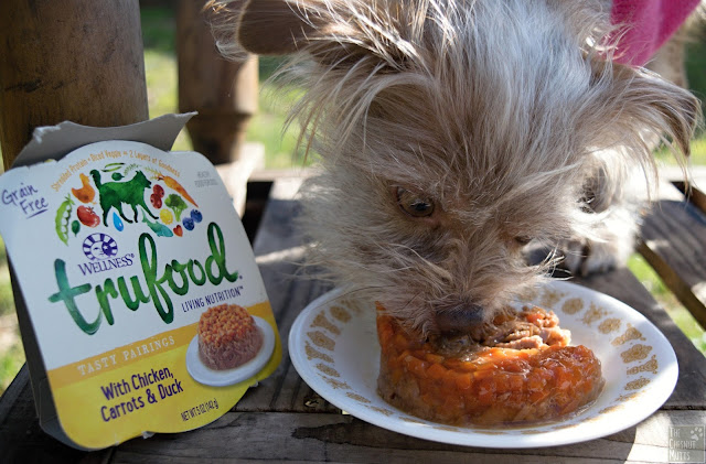 Bailey eating Wellness TruFood Tasty Pairings with Chicken, Carrots & Duck wet dog food