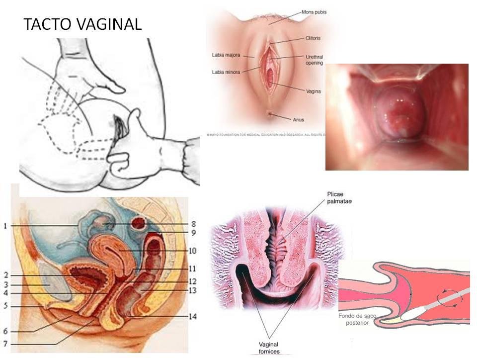 Asombroso Anatomía De Un Vigina Imagen - Imágenes de Anatomía Humana ...