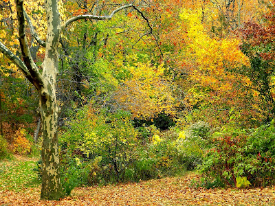 Autumn Fall Colors Clip Art