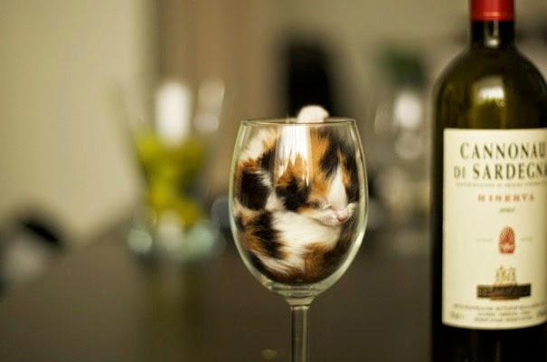 kucing dalam gelas seperti air
