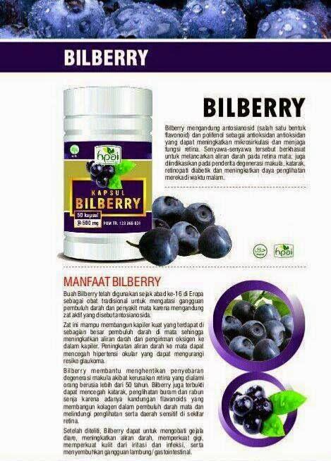 bilberry kapsul hpai surabaya