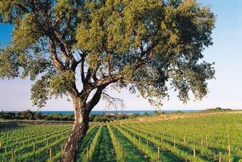 Vinos de Languedoc-Roussillon 3