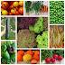 Gemüseanbau - 5 Tipps für eine ertragreiche Ernte
