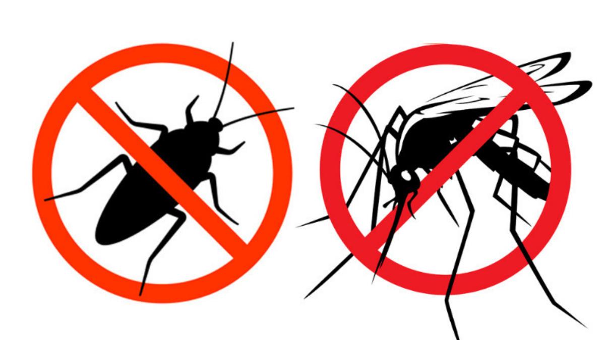 Insectos del verano se ahuyentan con repelentes naturales - Plantas ahuyenta insectos ...