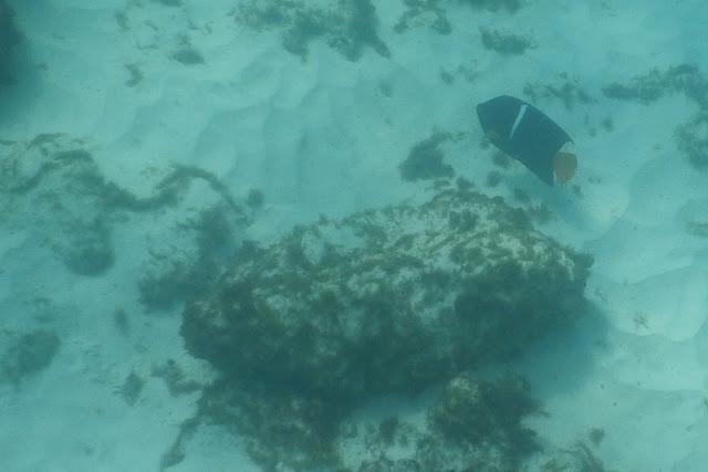 Gardner Bay snorkeling