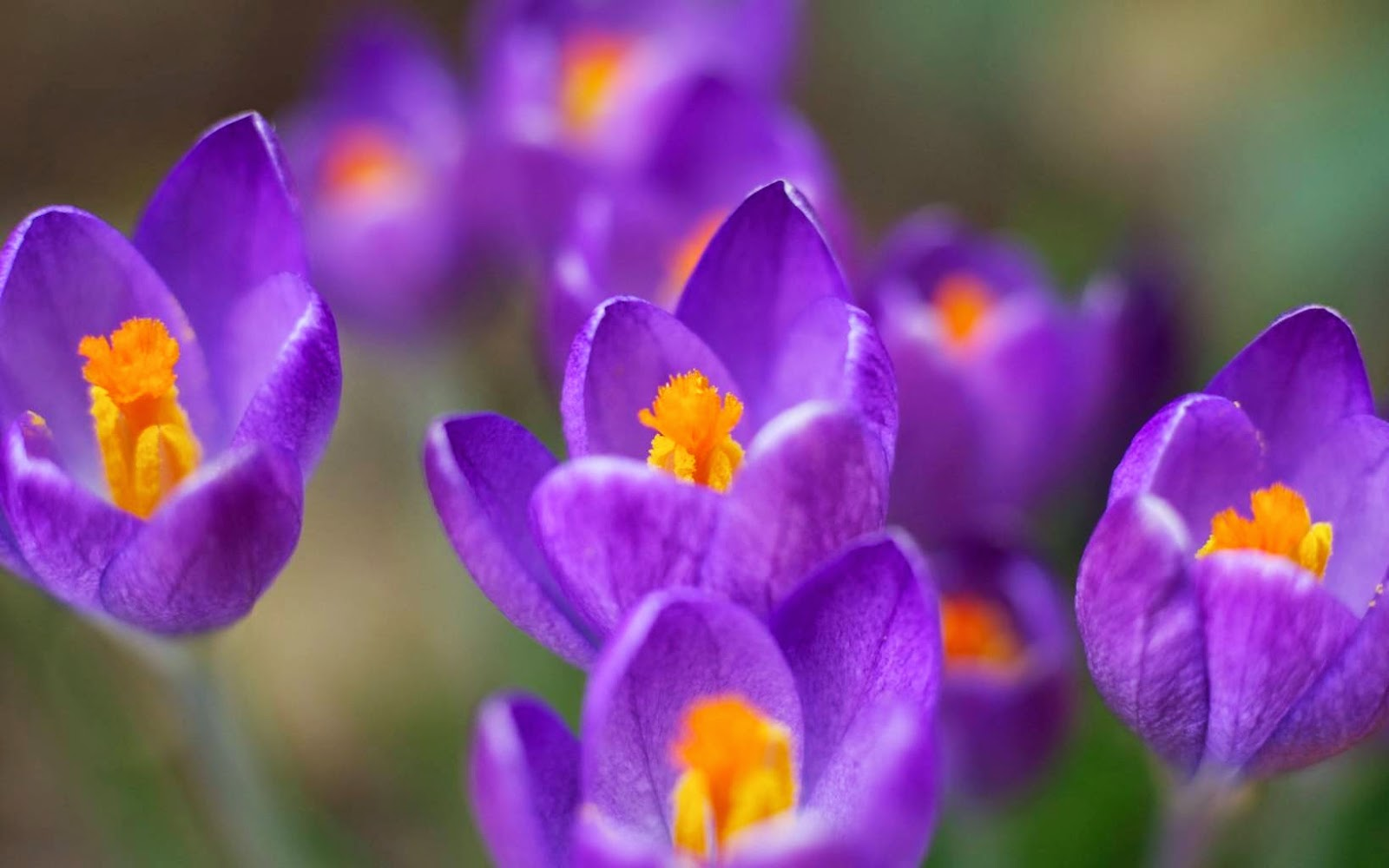 Spring Flowers Pictures 107