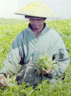masyarakat-suku-kerinci-di-provinsi-jambi