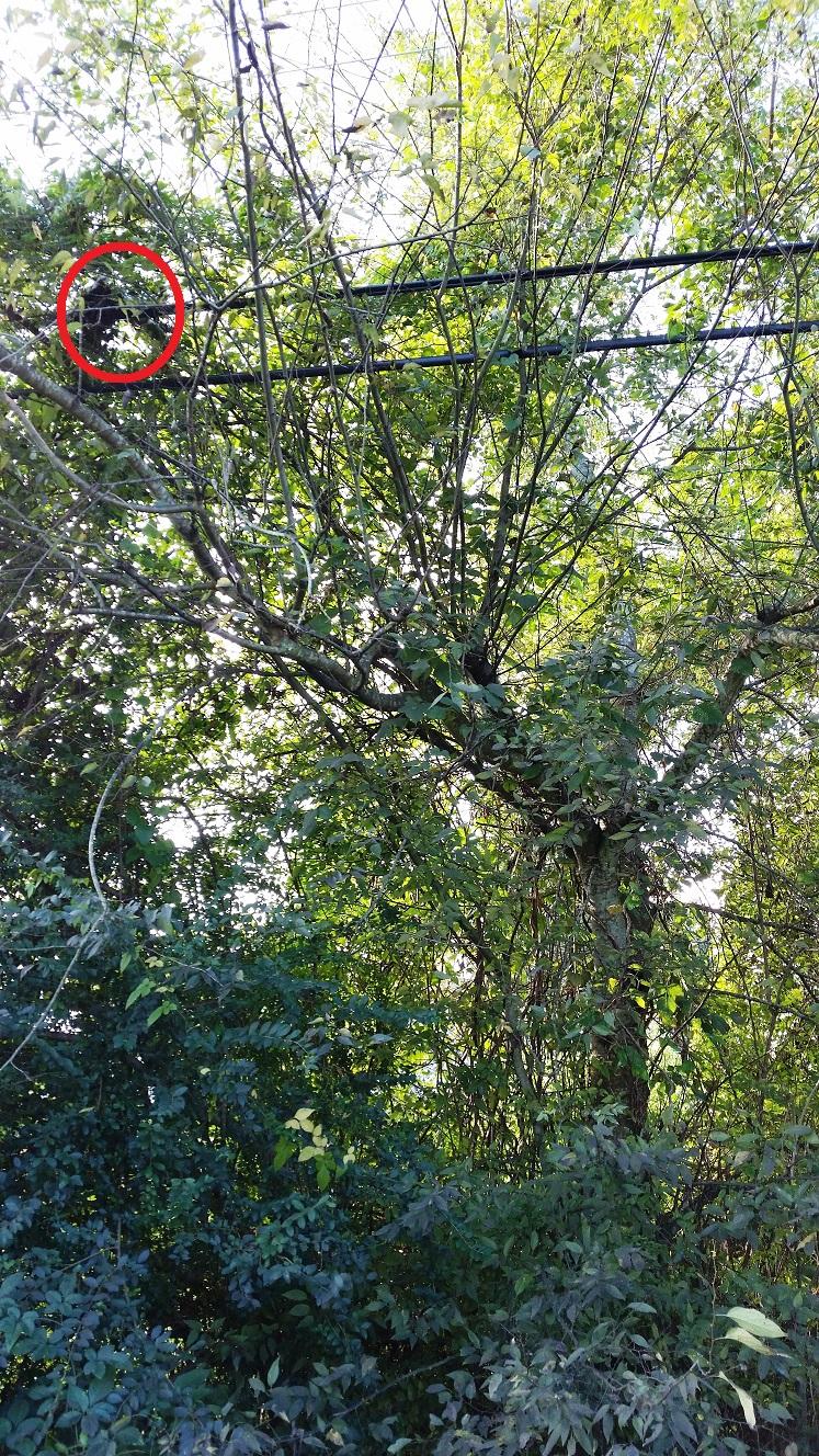 cat stuck in a tree oreo