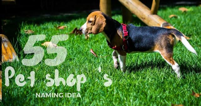 pet shop names-idea