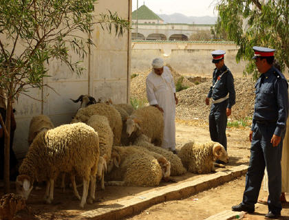 القبض على عصابة فراقشية بشيشاوة