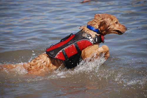5 Best Dog Life Jackets Reviewed - The Modern Bark | Dog ...