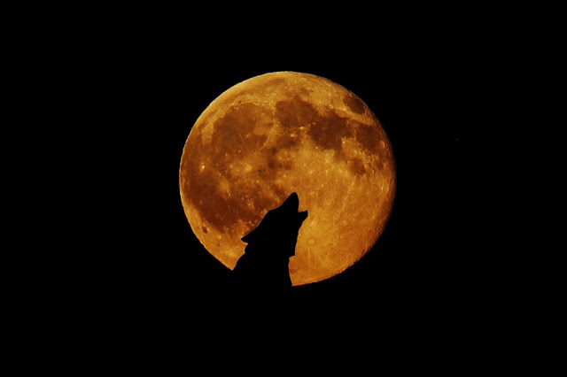 pełnia księżyca wycie wilków symbol znaczenie komunikacja tatuaż