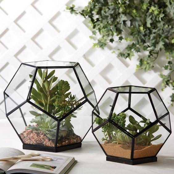 terrarium nasıl yapılır?