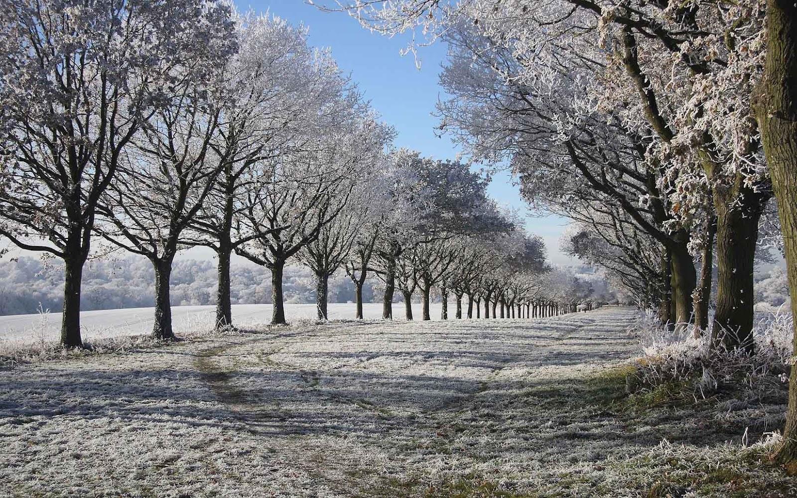 s1600 winter achtergronden winter - photo #25