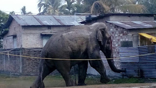 elephant in siliguri destroys 100 to 150 houses
