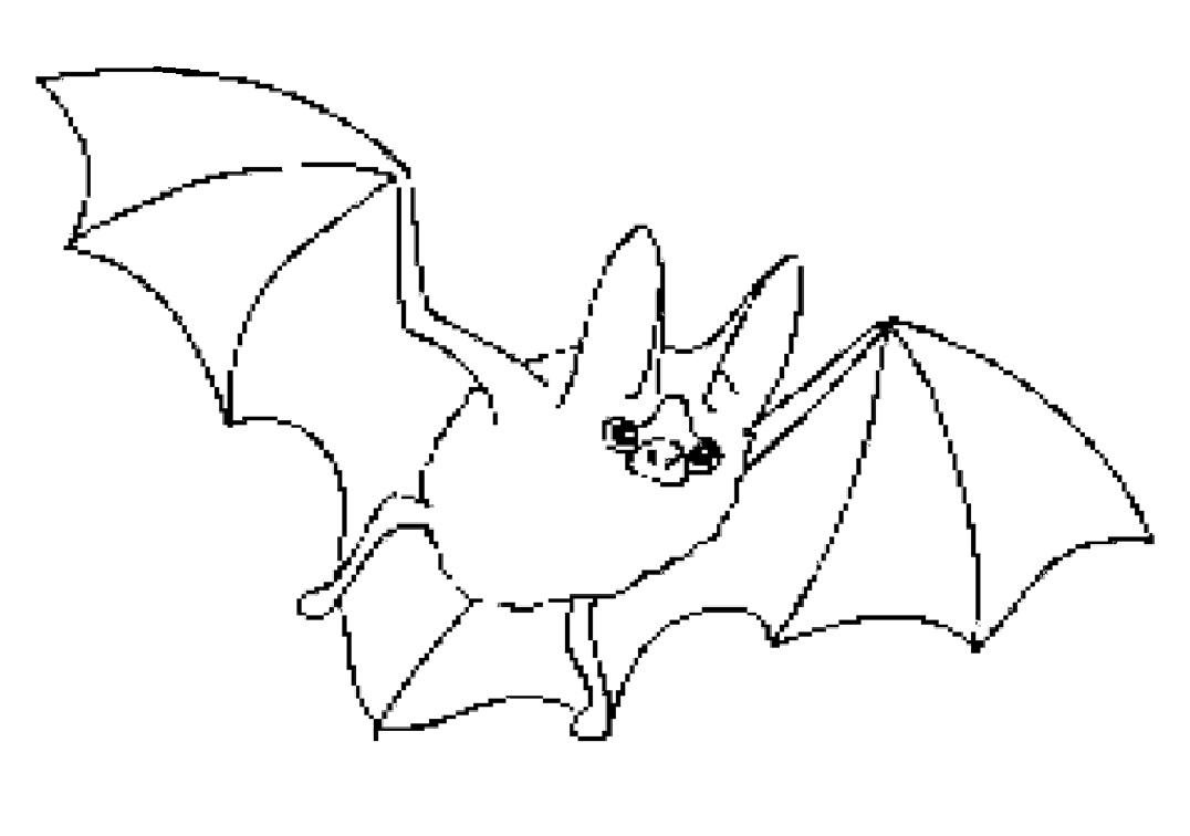 47 Gambar Sketsa Hewan Komodo Gratis Terbaru