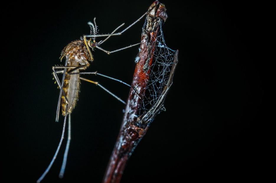 9 Cara Ampuh Mengusir Nyamuk Menggunakan Bahan Alami