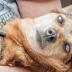 10+1 způsob, jak pomoci psům v nouzi