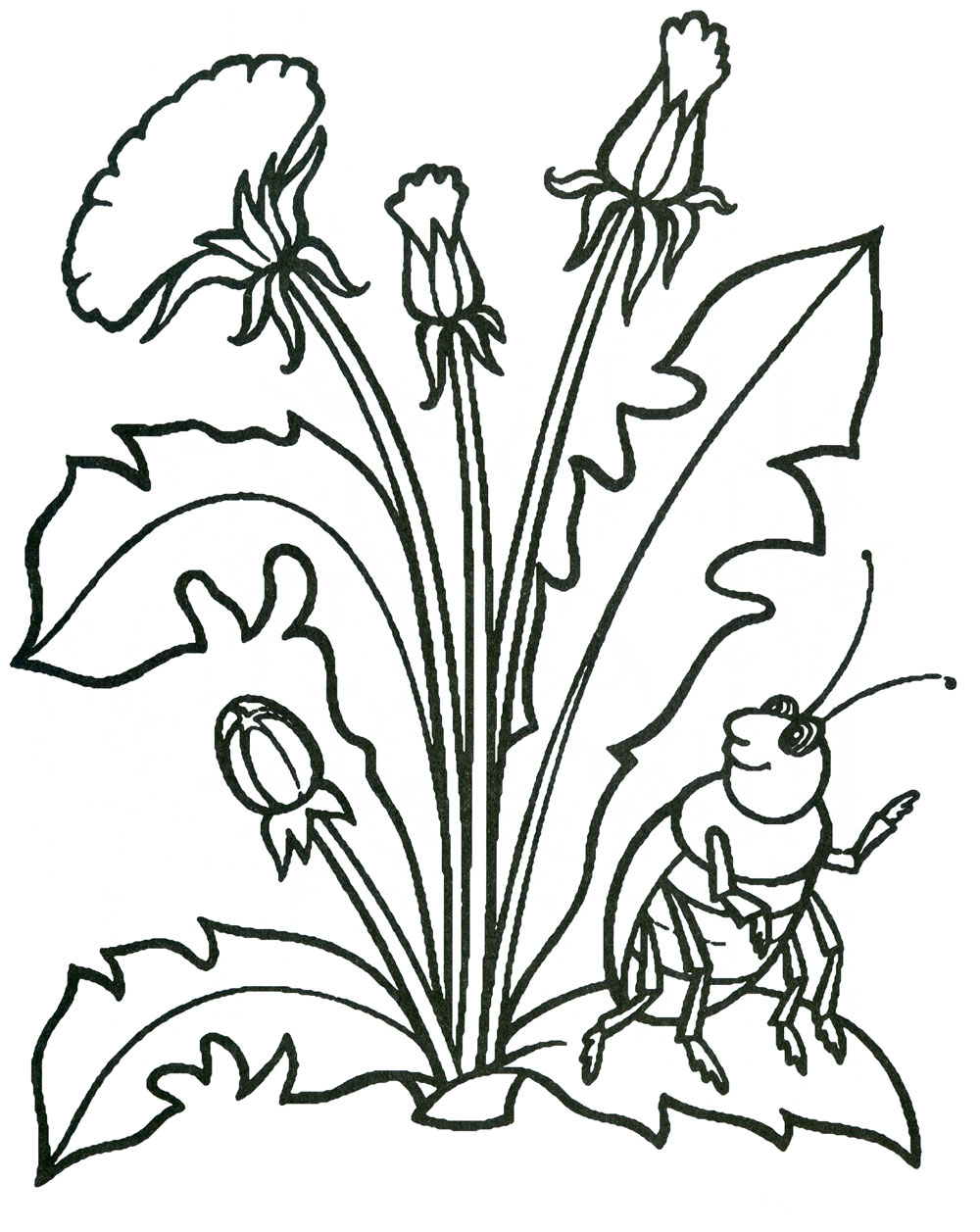 Раскраски деткам: Раскраска весенние цветы - одуванчики