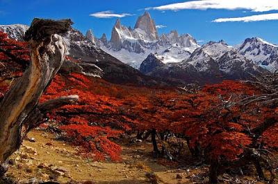 Hermosas flores rojas, Patagonia Argentina
