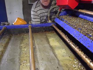 Método de separação de diamantes e ouro em mesa de graxa