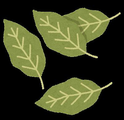 月桂樹の葉・ローリエのイラスト