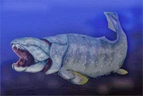 Placoderm balığı hakkında bilgi