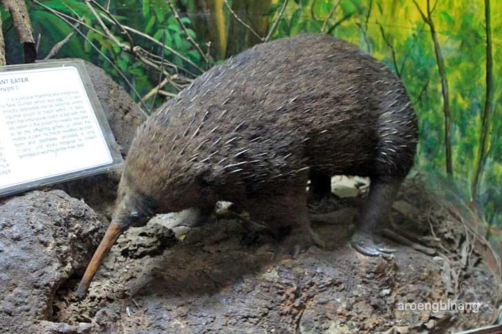 nokdiak museum zoologi bogor