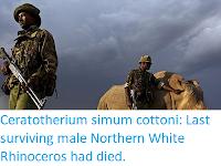 http://sciencythoughts.blogspot.co.uk/2018/03/ceratotherium-simum-cottoni-last_20.html