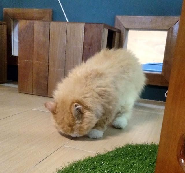 Johan and His Cats Studio - Tempat wajib bagi penggemar kucing