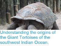 https://sciencythoughts.blogspot.com/2017/02/understanding-origins-of-giant.html