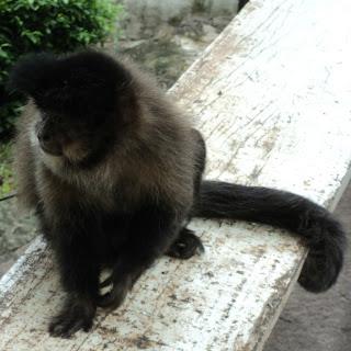 Macaco Próximo à Ponte da Integração, Iraí