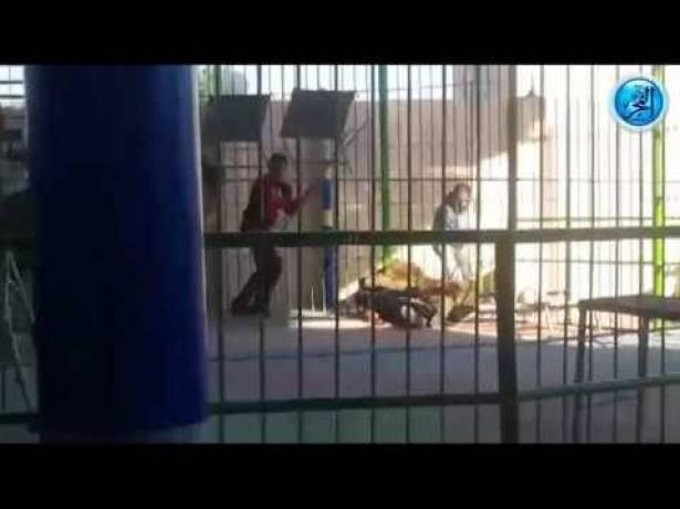 لحظة هجوم ثلاثة أسود على مدربهم في الإسكندرية