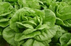 alface2 Atenção nas compras! Legumes e verduras estão aumentando de preço em São Paulo!