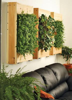 Decoración con plantas naturales