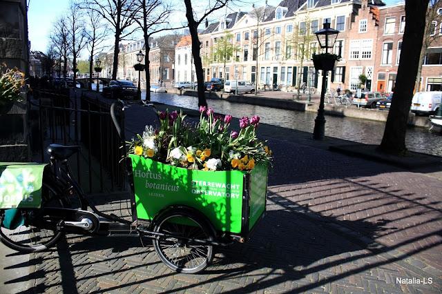 Голландия, Кекенхоф, нарциссы, тюльпаны, цветочные поля, Нидерланды, Лейден, ботанический сад