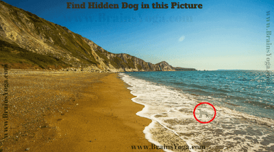Answer of Hidden Animal Picture Puzzle