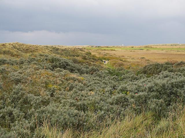 Typischer Dünenbewuchs der Dünen an der Nordsee