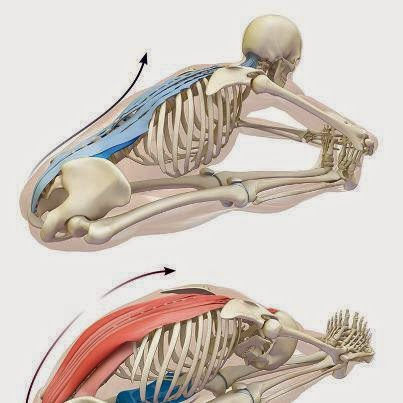 yoga postura paschimottanasana